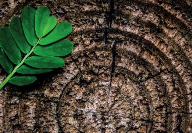 The circular economy and the bioeconomy_EEA Report